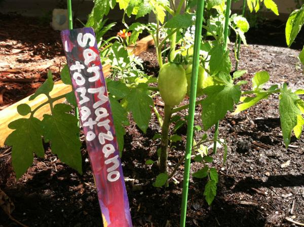 san marzano tomato paint stick garden marker