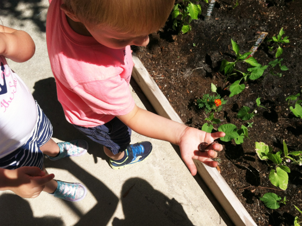 worms vegetable garden