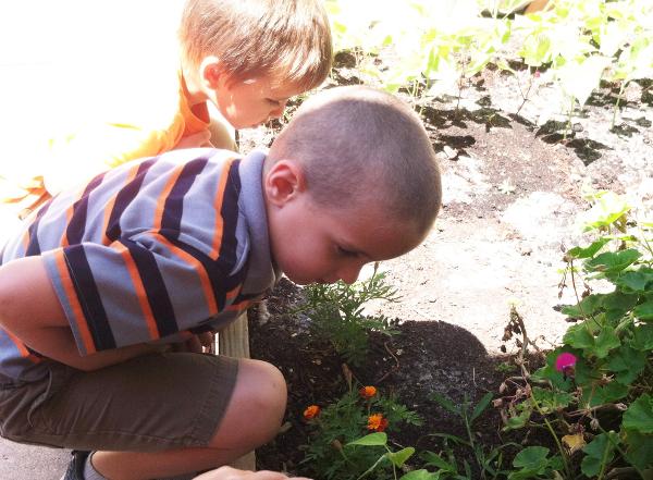preschool garden worms