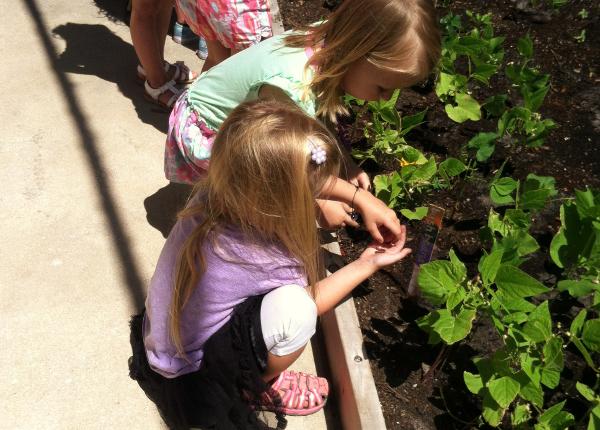 earthworms garden