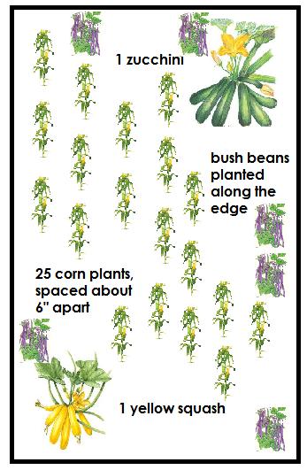 three sisters garden plan vegetables corn squash beans